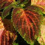 colorful-nettle-1620716-copy