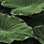 leaf-318743-copy